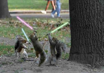 jedisquirrels - The Lightsaber - Photos Unlimited
